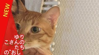"""石田ゆりこさんの愛猫たちの""""おしゃべり""""に耳をすませば 芸能ニュース 1..."""