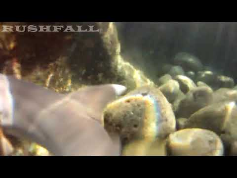 A Shark Bite in Queen's Bath Kauai, Hawaii