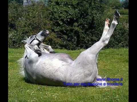 I cavalli pi divertenti del mondo youtube for Immagini di cavalli da disegnare