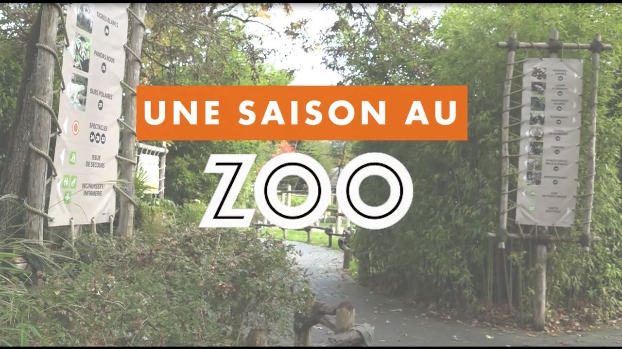 Une Saison Au Zoo L Album De L Emission