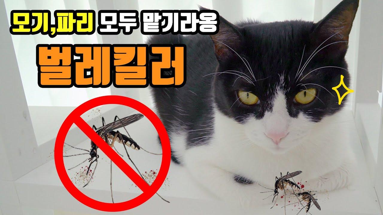 모기때문에 힘드시다구요? 고양이를 기르시죠!    고양이산책