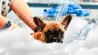 PUPPY'S FIRST BATH!! (ADORABLE)