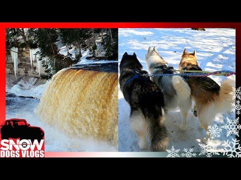 Dog Road Trip! MICHIGAN's LARGEST WATERFALL Taquamenon Falls