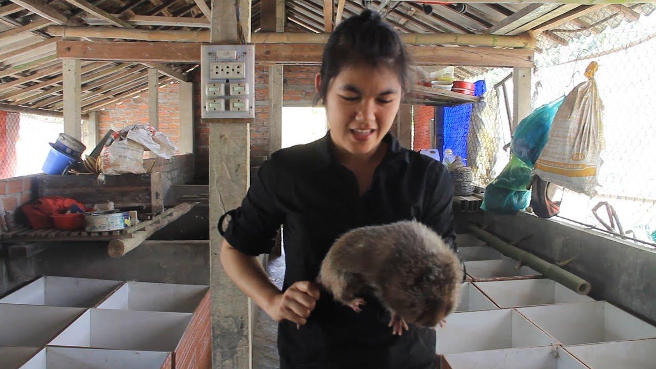 Cô cử nhân khởi nghiệp bằng nghề nuôi dúi