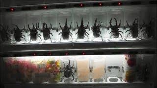 "Japanese Vending Machine ""Beetle"" ~ 自販機のカブトムシ!?"
