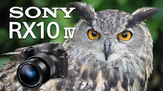 Sony RX10 Mk IV Review: Ultimate Fixed Lens Camera!