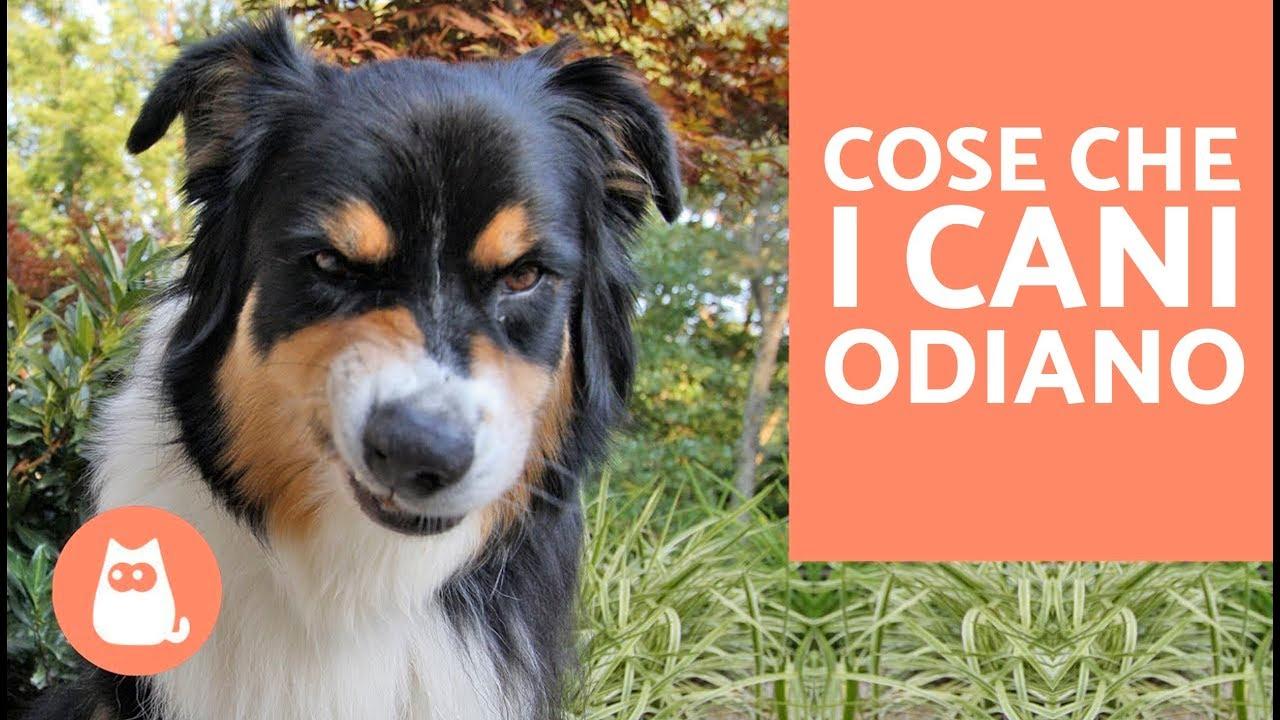 10 cose che i cani odiano delle persone curiosit sui