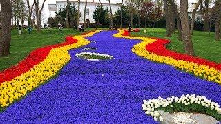 Emirgân Korusu - Tulip Gardens in Emirgan Park, Sarıyer Istanbul
