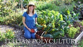 My Italian polyculture: 9 herb…