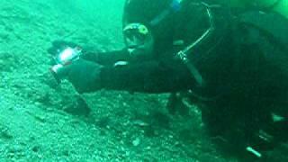 Diving Saltö