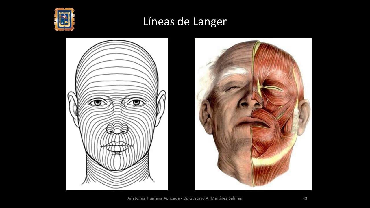 Músculos de la Cabeza; Anatomia Humana Aplicada_UIGV4 - YouTube