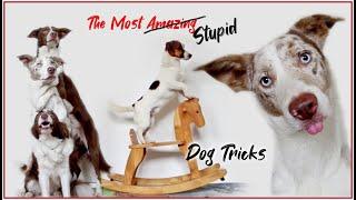 The Most Stupid Dog Tricks!