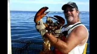 BIGGEST LOBSTER IN THE WORLD !!!!!