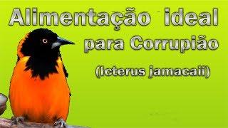 Alimentação ideal para Corrupião !!!!