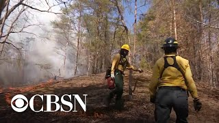 Controlled fires designed to limit damage of wildfires