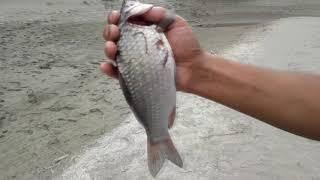 Особенности Алакольской летней рыбалки