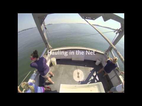 The Maritime Aquarium at Norwalk is hosting a new season of seal-watching cruises starting Saturday, Dec. 28.