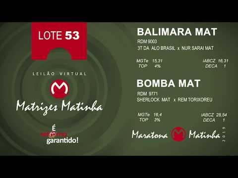 LOTE 53 Matrizes Matinha 2019