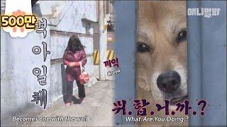 앞집 사는 그 개자슥 2화ㅣ Dog Only Barks At One Lady.. But When She Changed Her Appearance?!