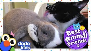 Smudge The Cat Plays Hide-And-Seek With Bossy Bunny Rabbit Missy   DODO KIDS: Best Animal Friends