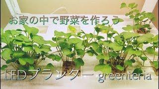 天候にも季節にも左右されずにお家で野菜を育てられる! LEDプランター ...