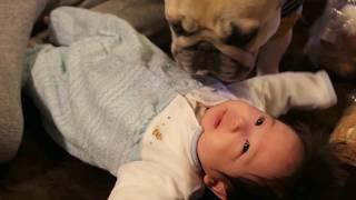 赤ちゃんに興味津々。でも程度をわきまえている波琉太です。