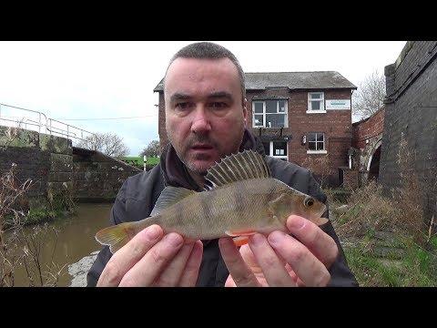 Ultra Light Lure Fishing - Shropshire Union Canal Pt4
