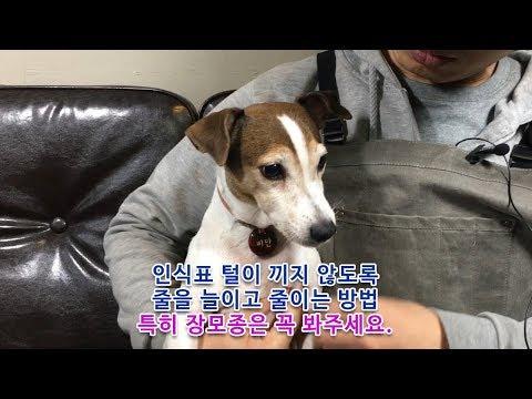 아텐퍼즐 강아지 고양이 인식표 줄조절 방법