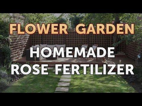 Homemade Rose Fertilizer - YouTube