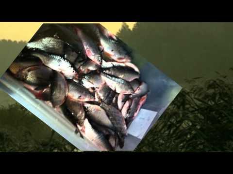 Челябинская область - Форум рыбаков