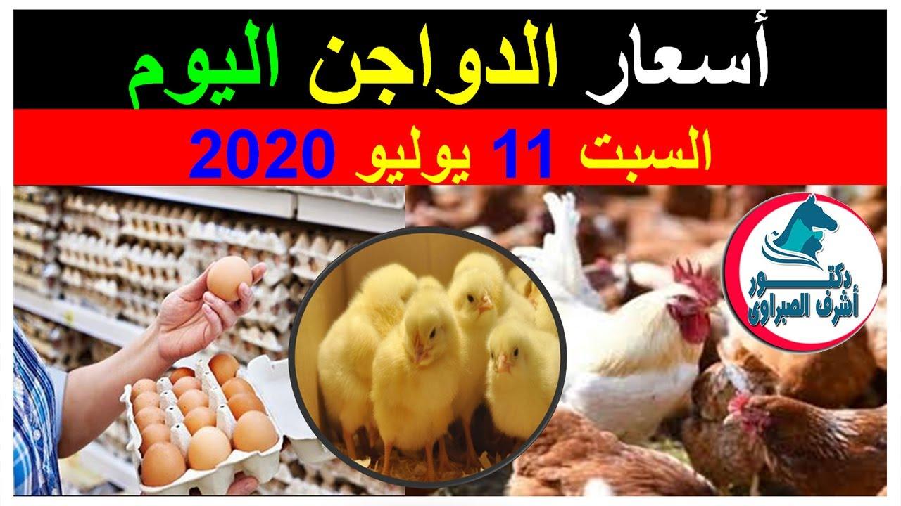 أسعار بورصة الدواجن والكتاكيت والبط والسمان   وأسعار بيض المائدة والعلف اليوم السبت 11 / 7 / 2020 !
