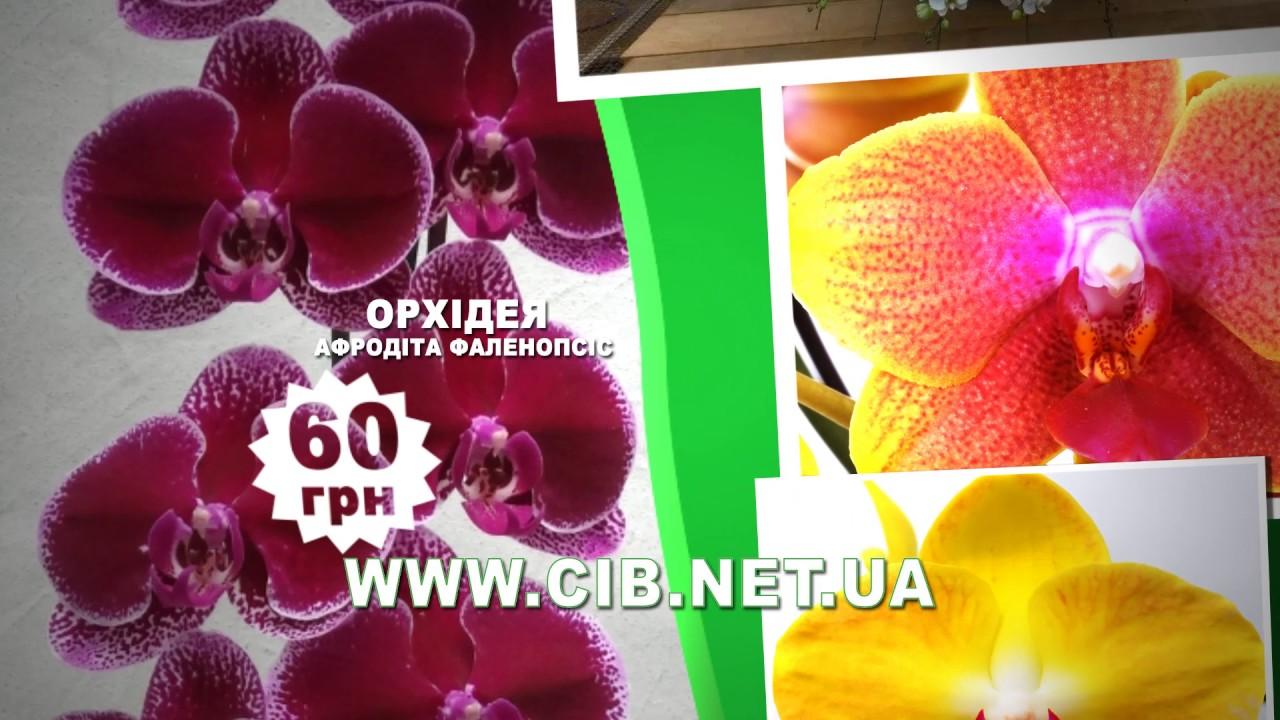 Заказать субстрат кокосовый для растений, рассады, цветов можно за 1 клик на semena. In. Ua. Подробности купить. Субстрат для орхидей. Цена от.