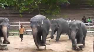 Zoo in Sri Lanka.avi