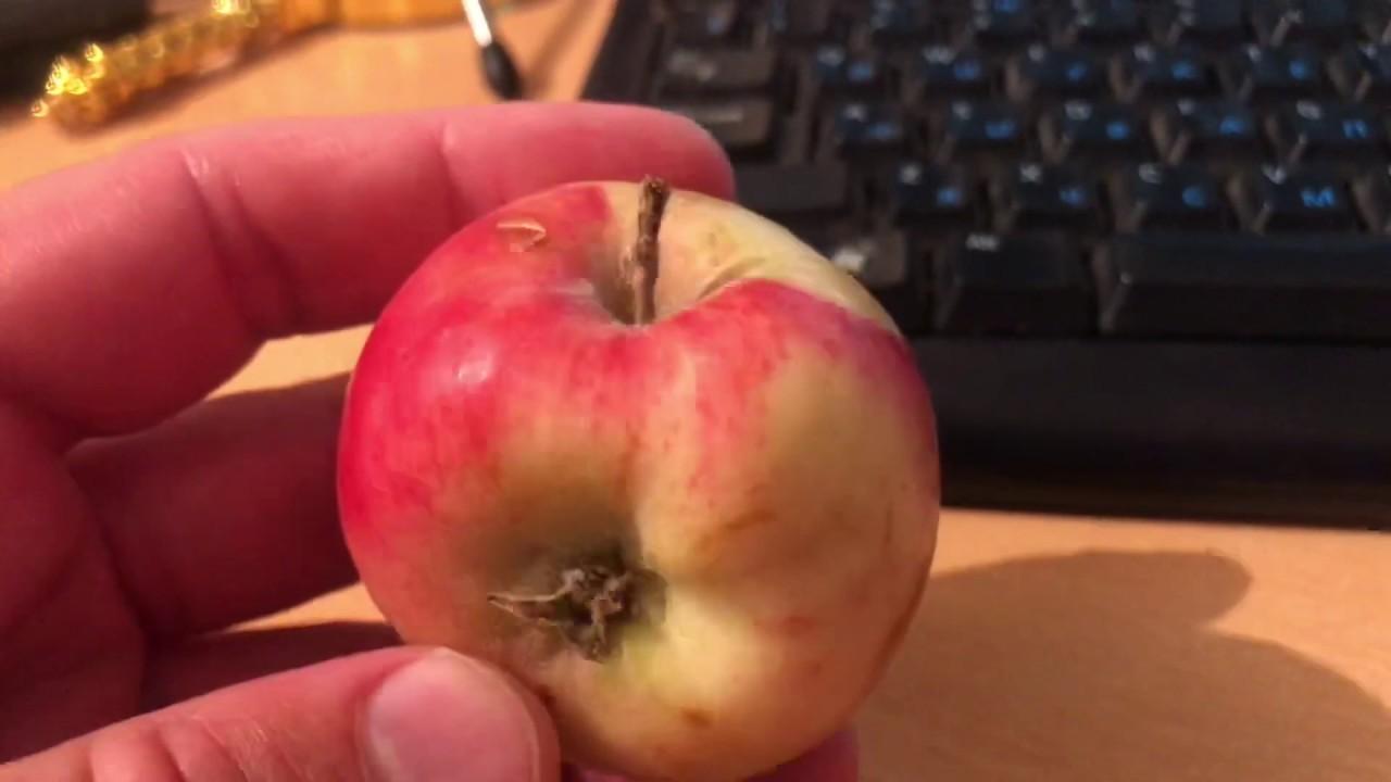 Женская попа яблочком, порно с накаченной членом