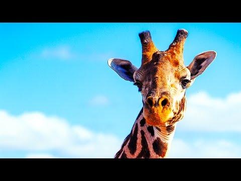 SAFARI nella SAVANA AFRICANA • In Kenya con gli Iscritti Ep.4 [Tsavo East National Park]