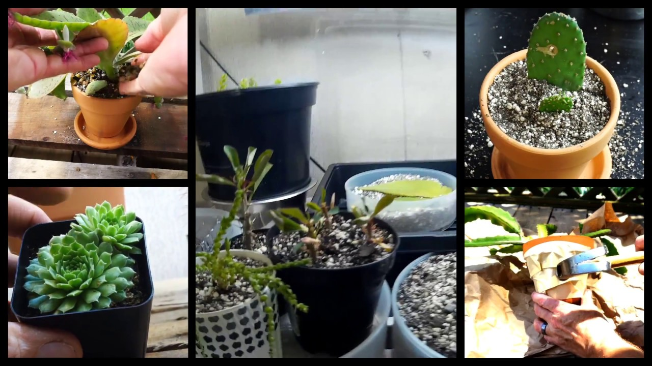 Amazing Cactus Grow Lights   Update   New Cactus And Succulents