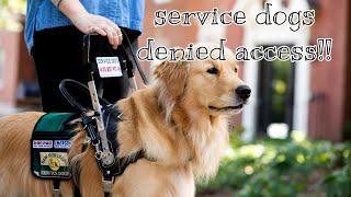 Service dogs that were denied public access compilation