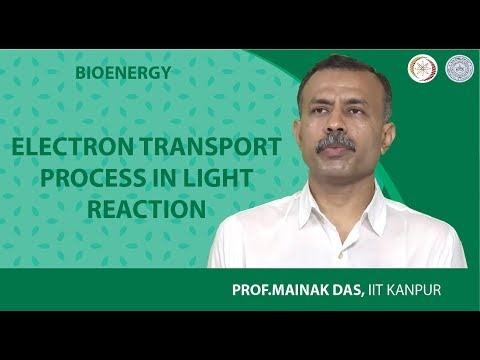 Electron Transport Process in Light Reaction