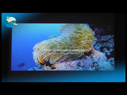 30anys 3a sessio: Biologia Marina