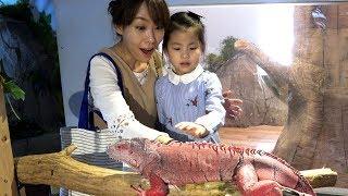 진짜 뱀을 만져봤어요!! 서은이의 파충류 박물관 뱀 도마뱀 거북이 이구아나 체험 학습 Reptile Museum
