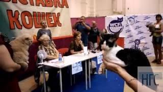выставка кошек в Омске