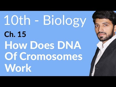 10th Class Biology book 2,How Does DNA of Chromosomes Work-Biology Chapter 15 Inheritance