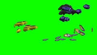 Рыба зеленый экран Fish green screen