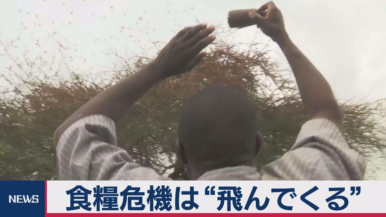 発生 バッタ なぜ 大量 バッタの大群動画が怖すぎる!大量発生はなぜ?原因や対策、現在地や日本に来る可能性は?