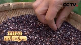 《田间示范秀》 20200625 高手来了·苗寨粽米香|CCTV农业