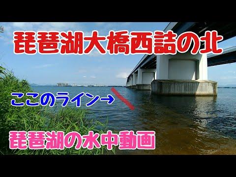 琵琶湖大橋西詰で大橋に沿って撮影 #琵琶湖大橋 #水中動画 #バスフィッシング