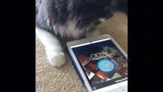 Hamilton The Hipster Cat –That's My Jam! –Thumbprint Radio