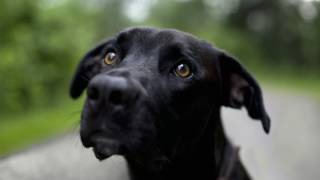 Что делать, если у собаки понос?