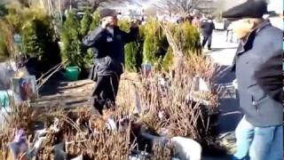 видео Выставка-ярмарка Дача. Сад. Ландшафт в Москве фото