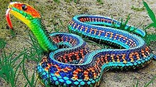 Dünyanın En Nadir Görülen 8 Tehlikeli Yılanı